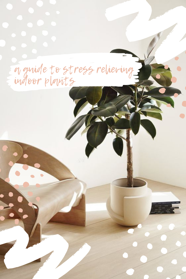 A Guide to StressRelieving Indoor Plants Indoor plants