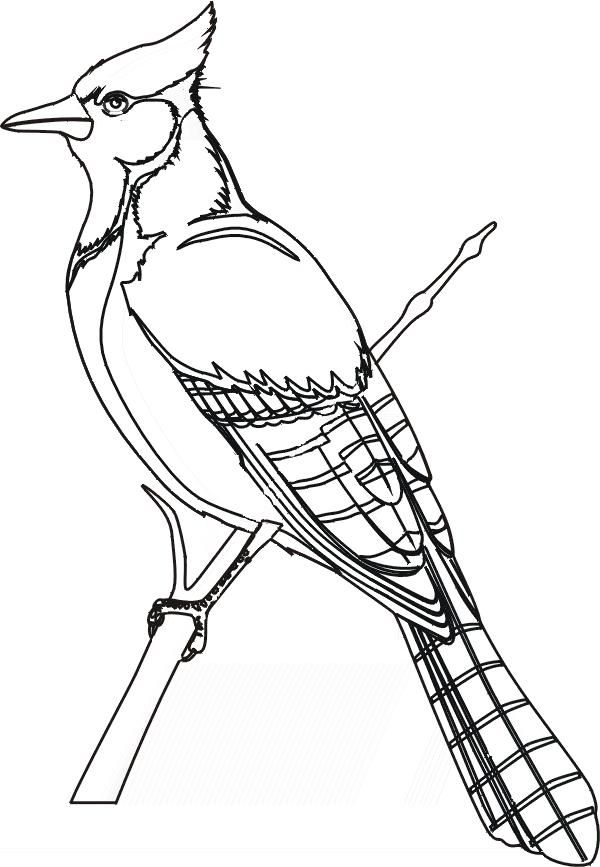 Blue Jay Bird Coloring Page Printable Projects to Try