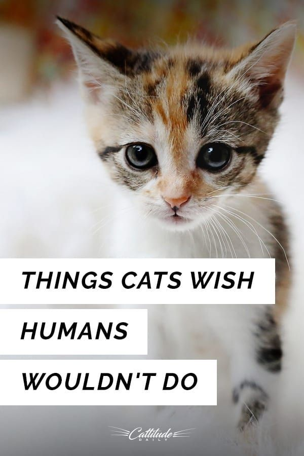 11 Things Cats Wish Humans Wouldn T Do Cat Behavior Cats Cat Quotes