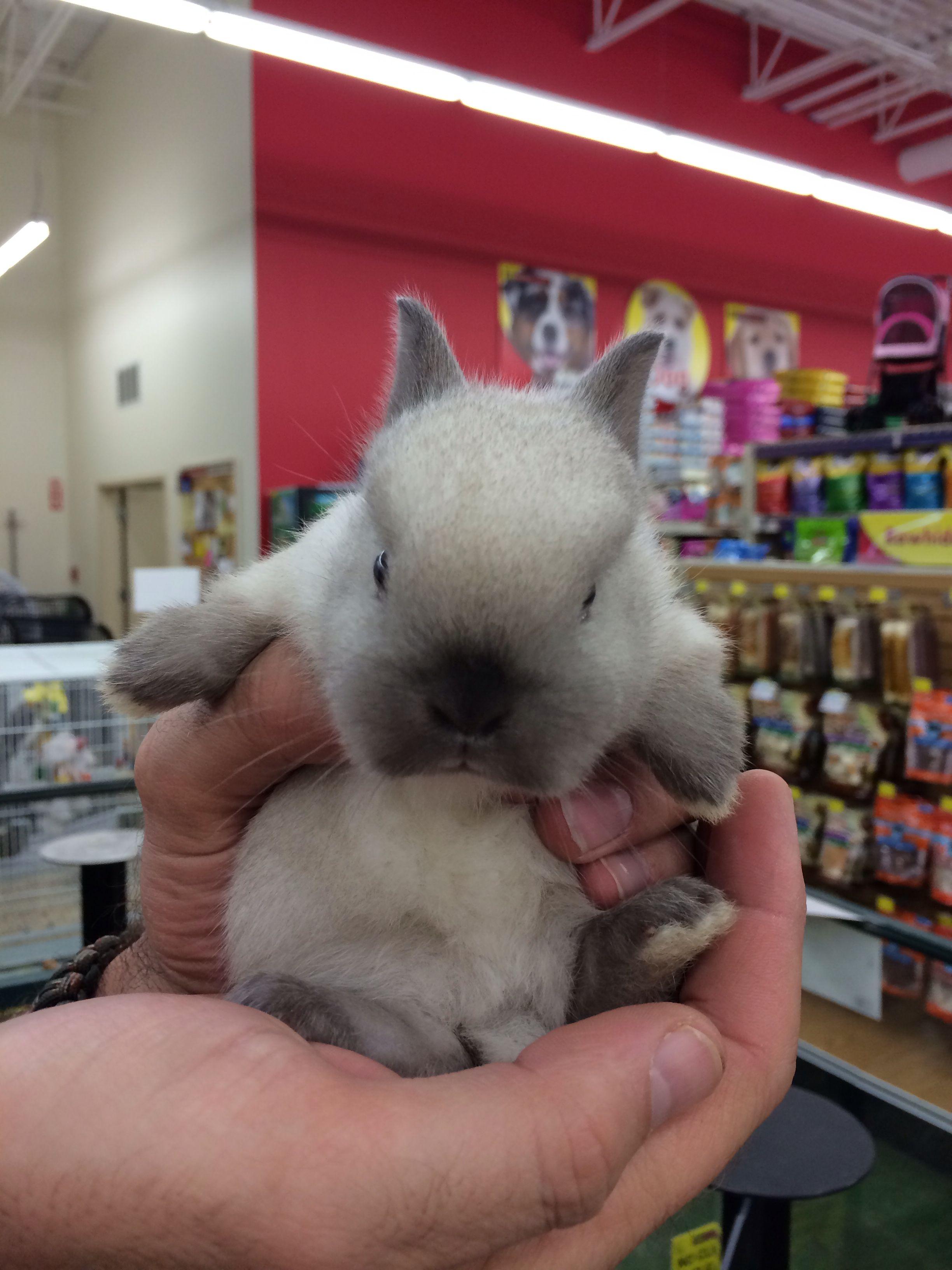 Pet Store Dwarf Baby Bunny Dwarf Baby Baby Bunnies Pet Store