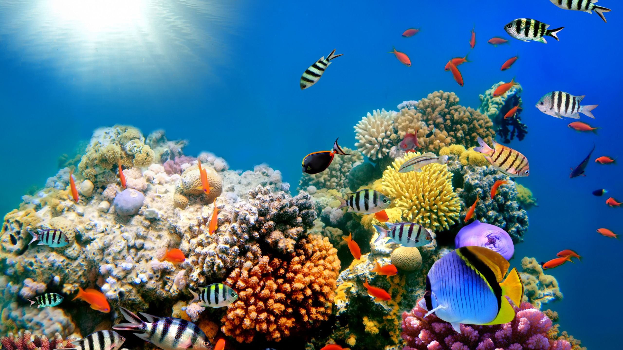 Tropical Wallpaper Coral Reef Underwater Ocean Fishes Underwater Tropical Wallpaper Underwater World Underwater