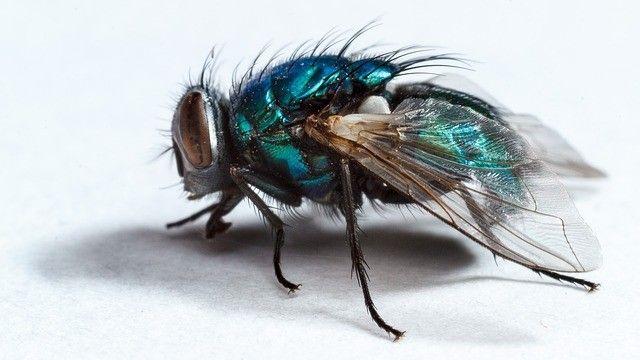 Hangen Sie Einen Beutel Voller Wasser Vor Ihre Haustur Um Fliegen Dauerhaft Zu Entfernen Klickdasvideo De Fliegen Insekten Fliegen Fernhalten