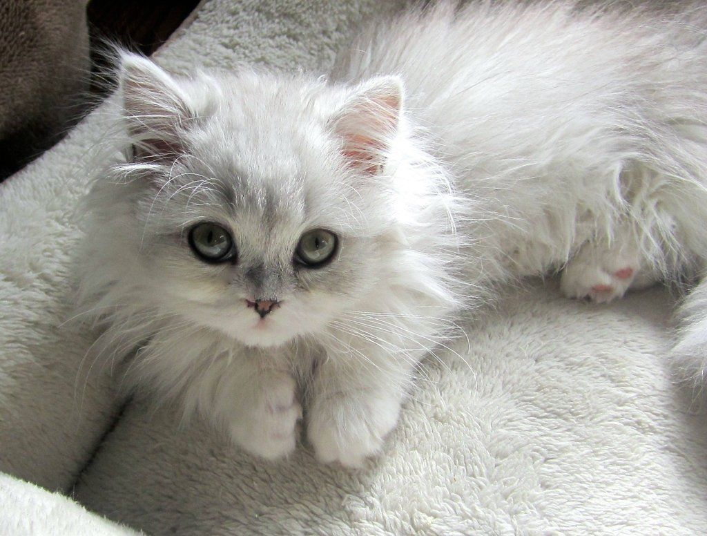 This cutie pie won me over all ready Kittens Pinterest