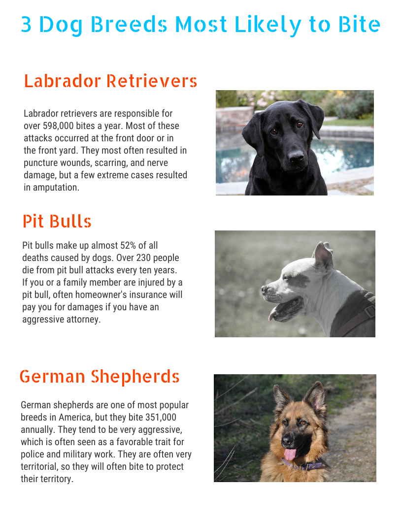 3 Dog Breeds Most Likely To Bite Http Mossberginjurylaw Com 2018
