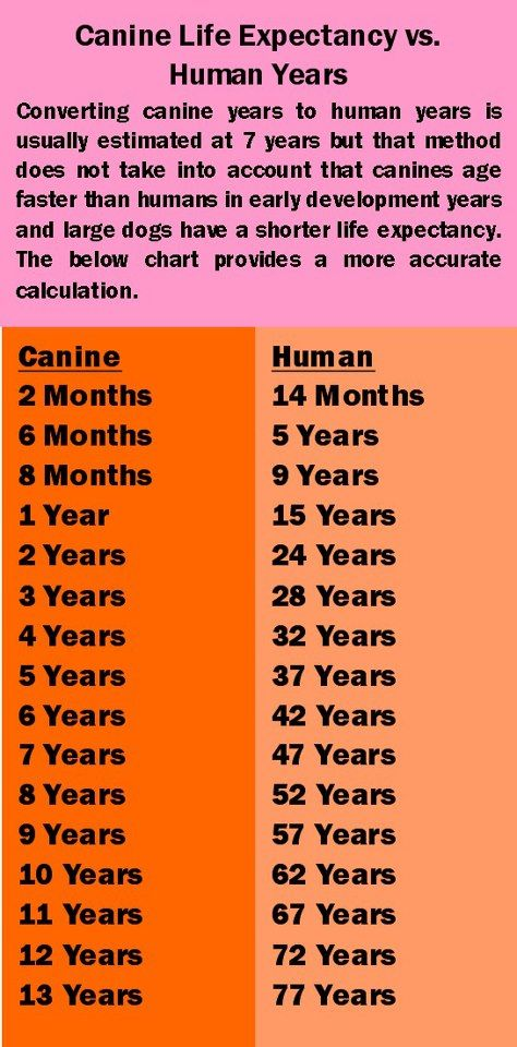 Dog Years Chart Dog Years Chart Dog Years Dogs And Puppies