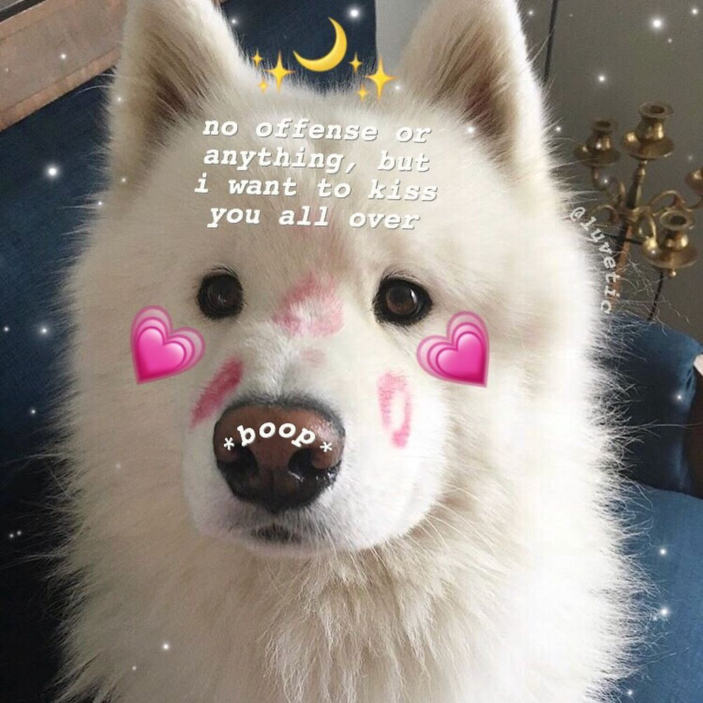 ʟᴏᴠᴇ ғᴏʀ ʏᴏᴜ Cute love memes, Love memes, Cute memes