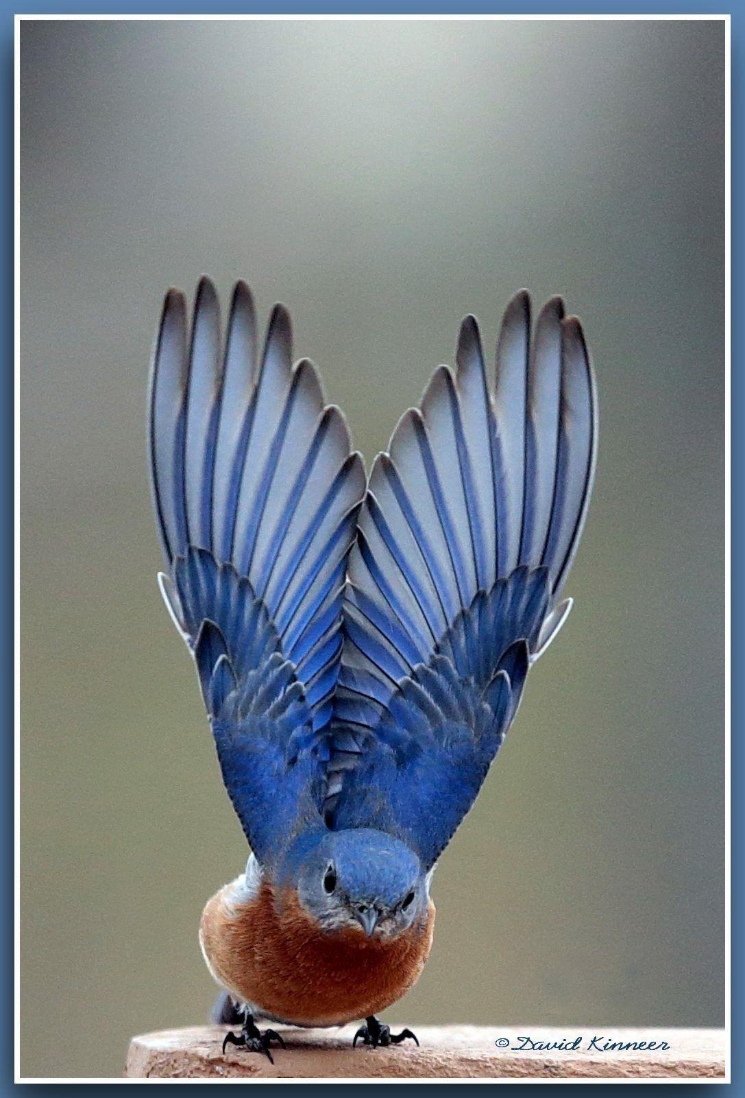 Pin Von Katia Michel Auf Bilder Mit Bildern Vogel Als Haustiere Hubsche Vogel Tierbilder