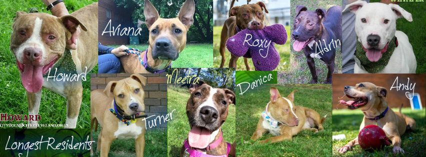Longest Residents Cleveland OH Adopt! Rescue! Email