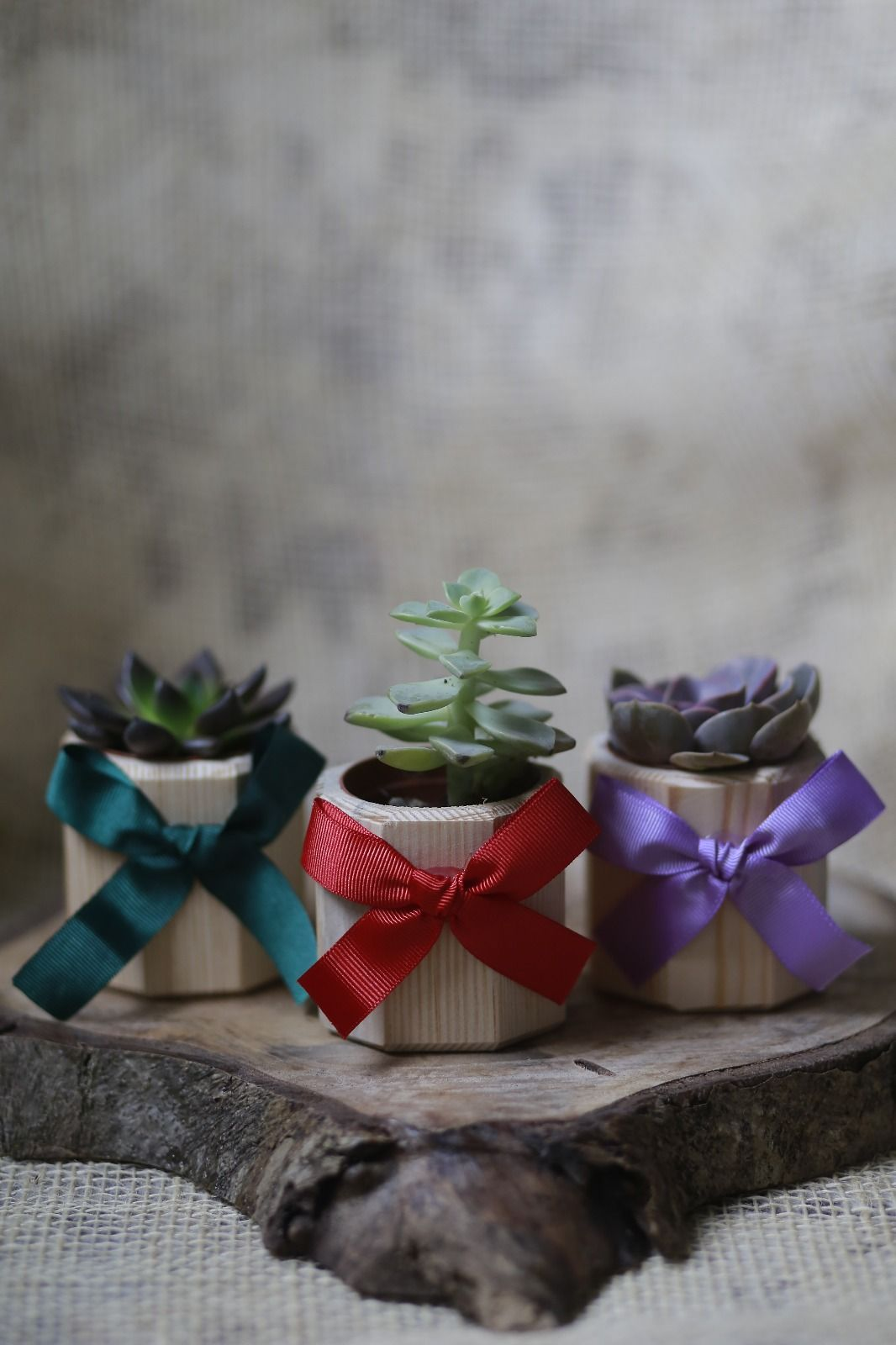 Photo of Octagonal Wooden Gift succulent – Turkey's succulent Market!