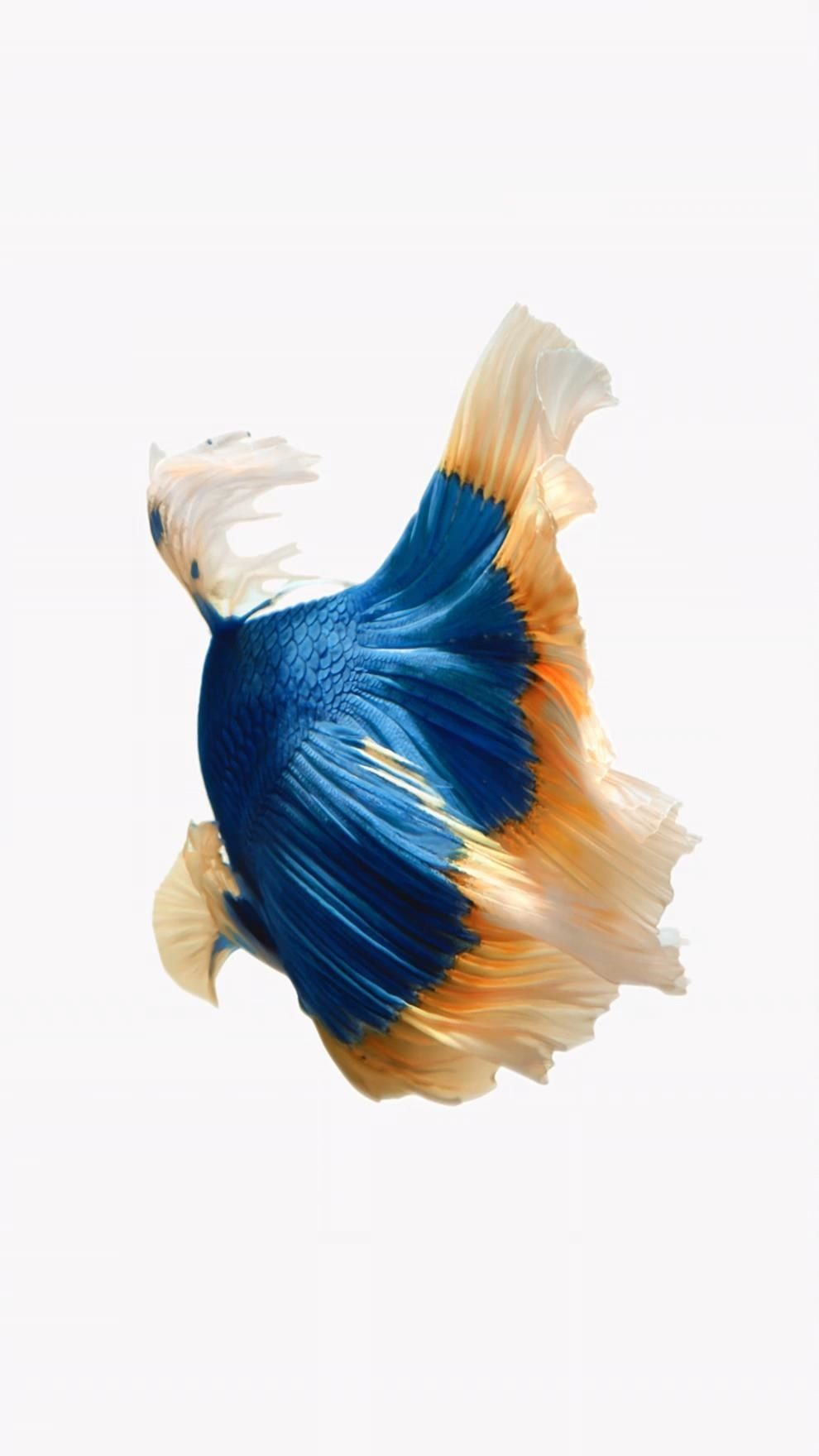In The Latest Beta For Ios 11 Apple Removed The Live Fish Wallpapers From The Iphone So You C Live Fish Wallpaper Iphone 6s Wallpaper Live Wallpaper Iphone 7
