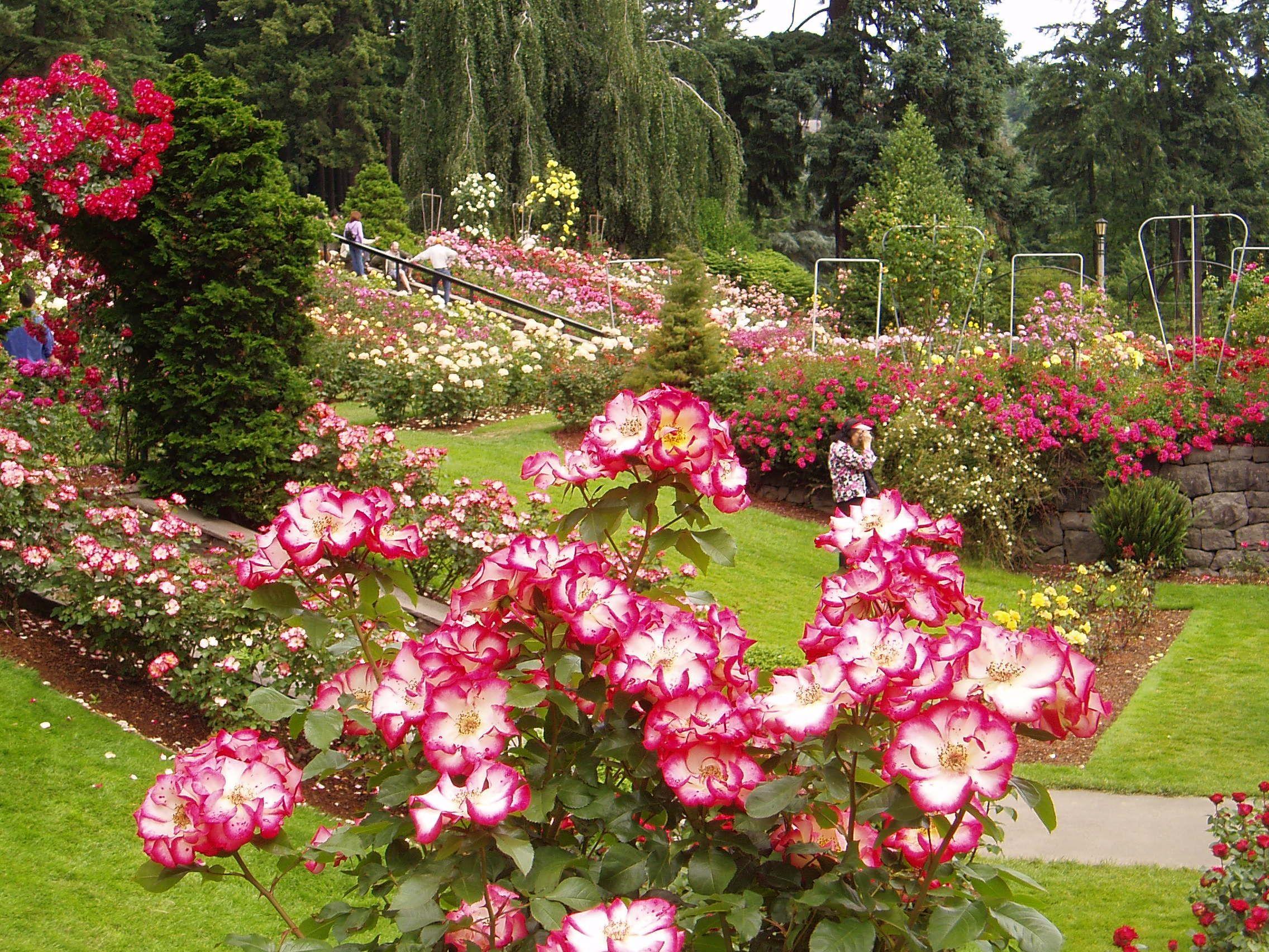 Portland Oregon Rose Garden I Luv Oregon Pinterest