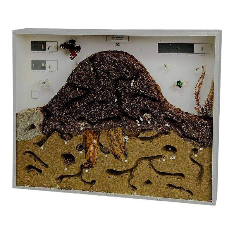 нужен картинки муравейник изнутри анимационная открытка