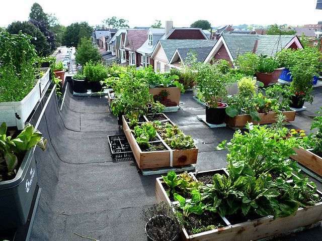 Good view of neighbour 39 s roof tops roof top vegetable for Garden design ideas ontario