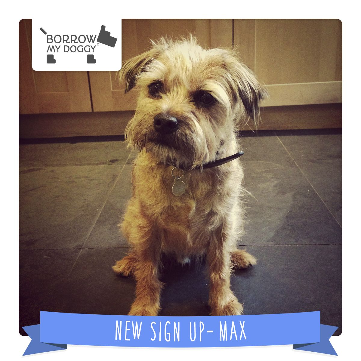 Find Your Perfect Match Dog Walking Dogs Border Terrier