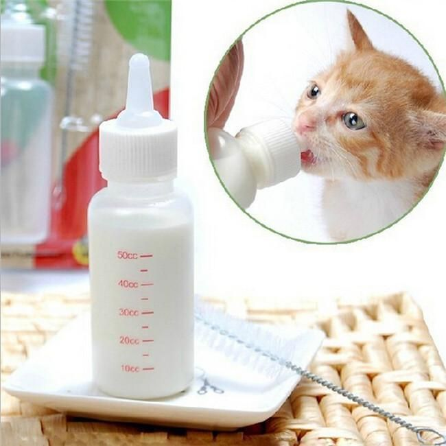 Weaning Kittens How And When What To Feed A Kitten Bottle Feeding Kittens Feeding Kittens Kittens Cutest Cute Kitten Gif