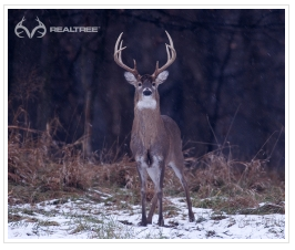 Realtree Hunting Wallpaper Realtree Whitetail Buck Hunting Wallpaper Realtree Wallpaper Real Tree Camouflage