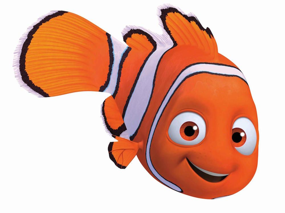Quiz which finding nemo character are you finding nemo for Finding nemo fish names