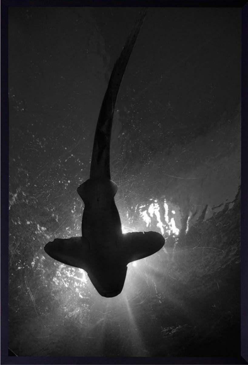 Quadro Decorativo com Moldura Preta Tubarão em Preto e Branco 60x80cm - Decore Pronto