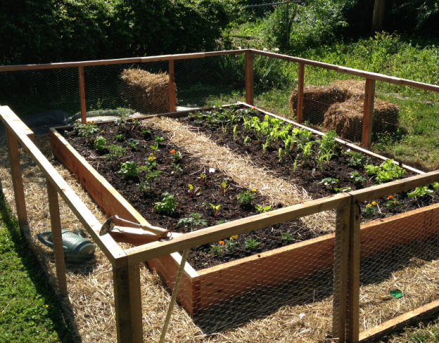 Grow Your Own | Jeanne Nolan of The Organic Gardener starts a Babble blog