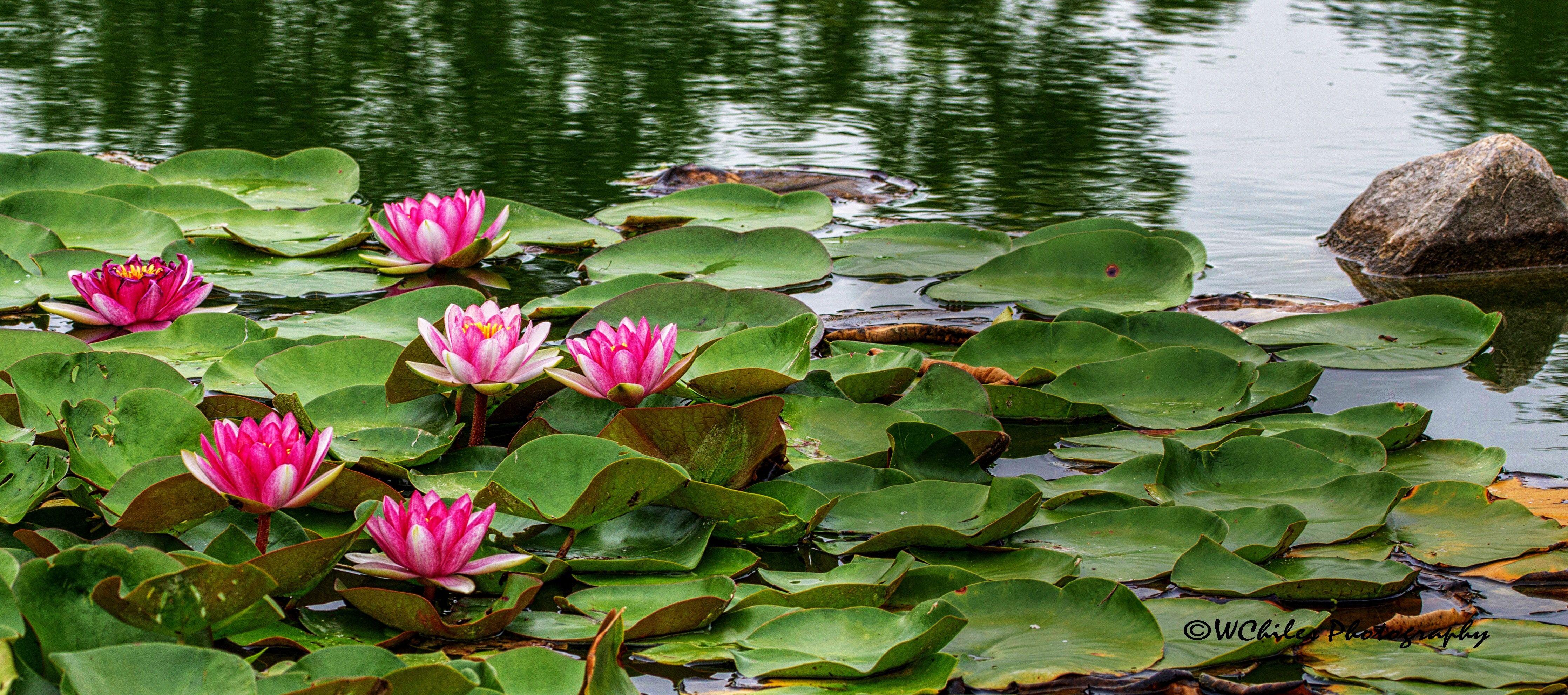 Pin by Yukoen Garden On The Elkhorn on Yukoen Garden on