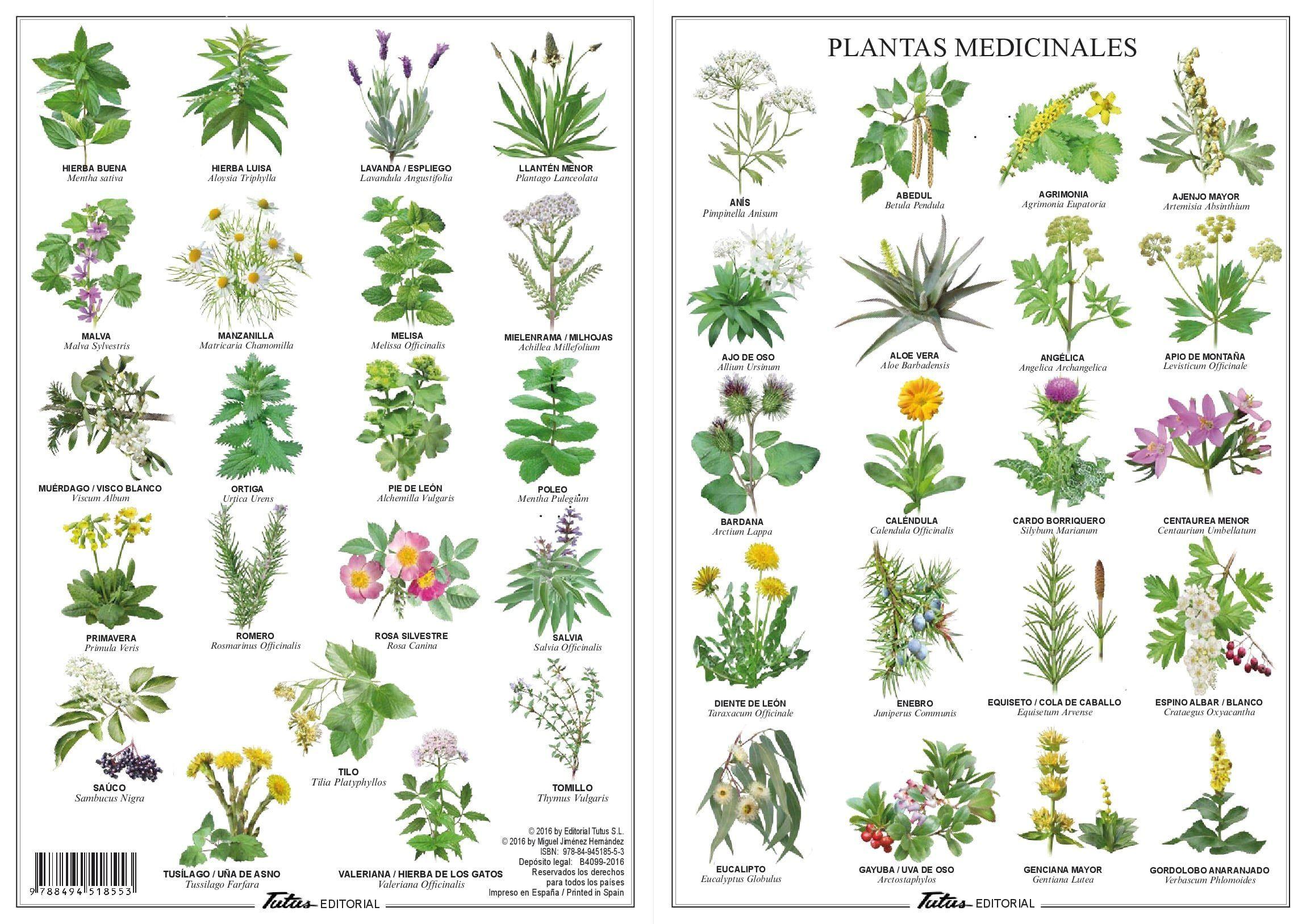 historia de las hierbas mágicas y medicinales pdf