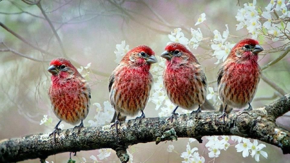Gorgeous Red Birds