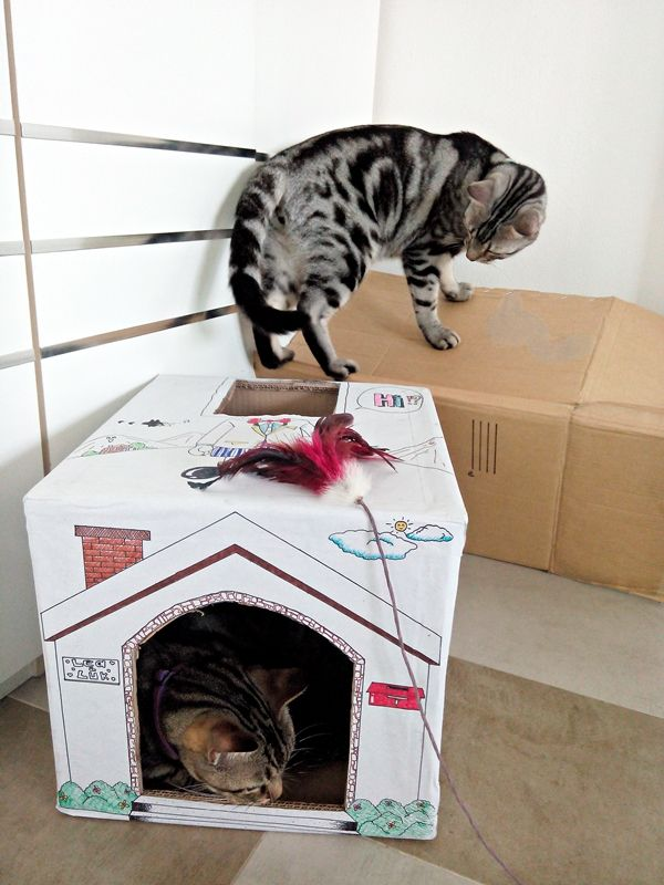 Diy บ านแมวน อยจากล งกระดาษเก าๆ Diy และงานฝ ม อ