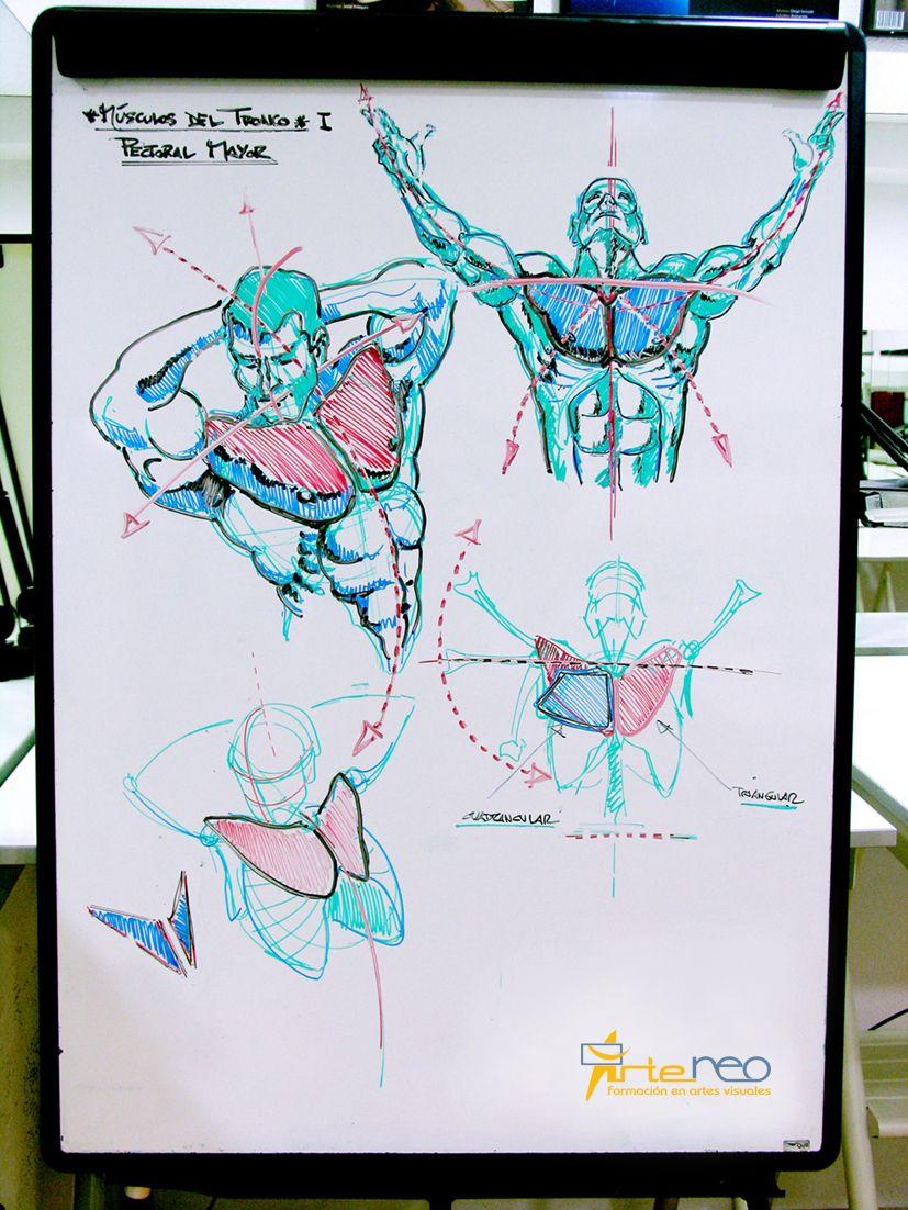 Explicación de los Ejes y músculos pectorales. http://www.arteneo ...