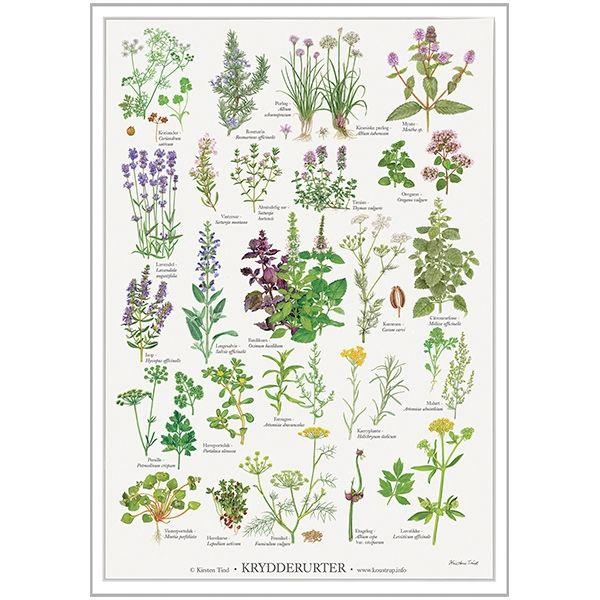 Koustrup Co Plakat Krydderurter Planter Plakater Naturlig Have