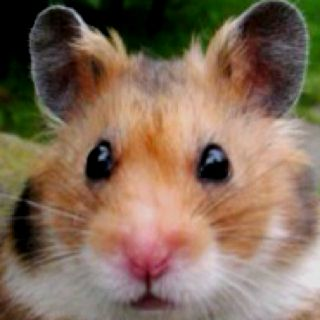 Cute hamster= its shubba dee dee