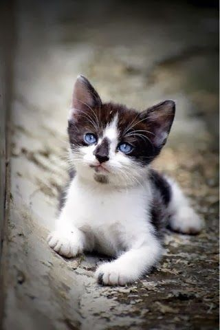 5 Amazing Kittens With Blue Eyes, Click The Pic To See All - Click for More...