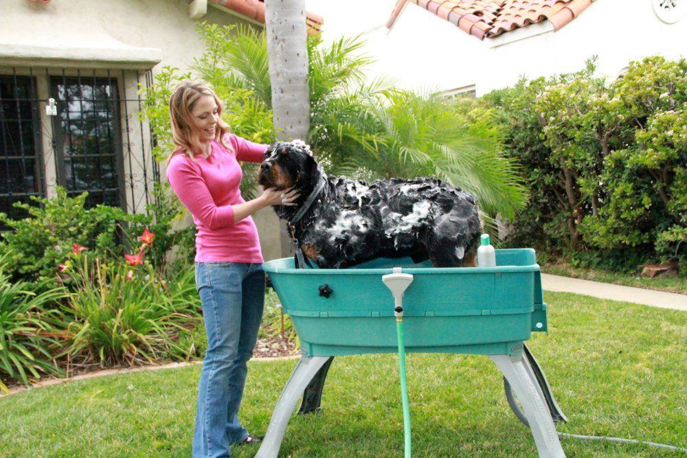 Amazon Com Booster Bath 3040 Blue Large Dog Wash Pet Shower
