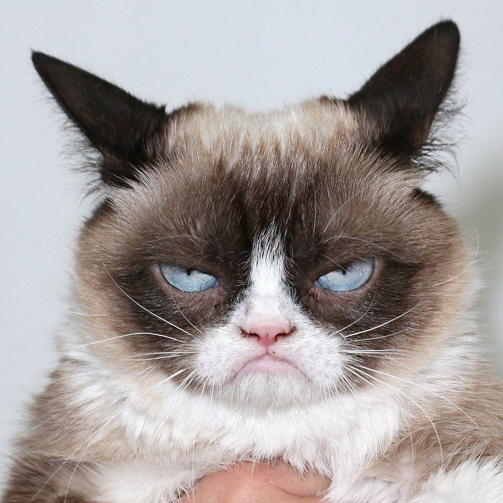 "funny cat」だç"" 像検索結果 cat Pinterest"