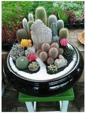 28 Lovely Cactus and Succulent Garden Ideas for Indoor#fashionshoot #fashioninsta #fashiontrend #fashionw 28 Lovely Cactus and Succulent Garden Ideas for Indoor#fashionshoot #fashioninsta #Cactus #Cactus art #Cactus garden #Cactus indoor #Cactus plants #fashioninst #Garden #Ideas #Indoorfashionshoot #LOVELY #succulent