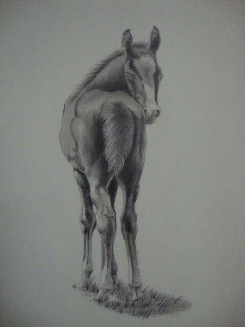 Black white pencil painting