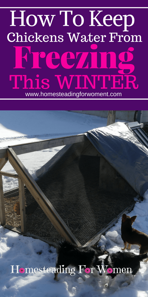 How to keep your chickens water from freezing this winter. No more breaking ice!