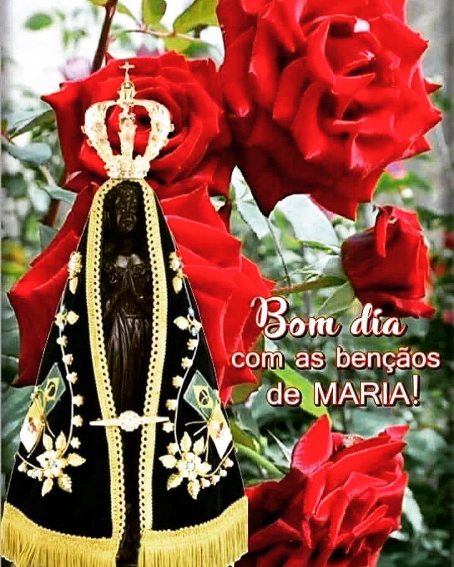 A Imagem Pode Conter Flor Dia De Nossa Senhora Aparecida