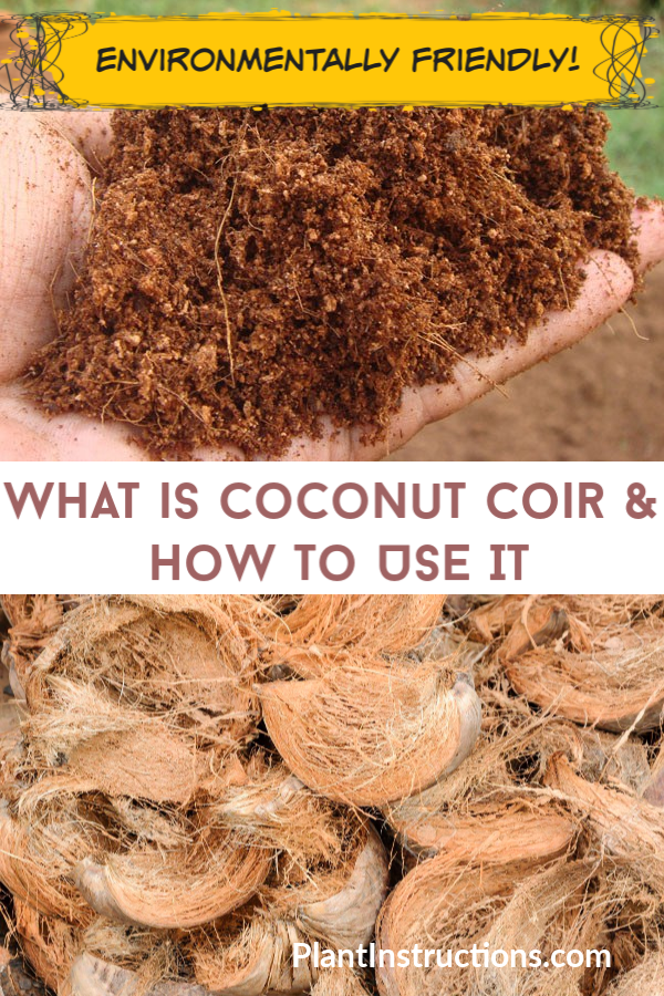 What is Coconut Coir is part of Coir, Types of mulch, Garden compost, Coconut fiber, Coconut benefits, Aquaponic gardening - If you've been gardening, you've no doubt seen the words 'coconut coir' thrown around  But what exactly is coconut coir and how do you use it in gardening  Basically, coconut coir is a type of mulch that's environmentally friendly, as opposed to other commercial mulches  What is Coconut Coir & How to Use It Coconut coir, also known as coconut fiber, is a natural waste product that comes from the processing of coconuts, also known as the husks  Before shipping, the fibers are separated, cleaned, sorted, and graded  Because it's so environmentally friendly, coconut coir has become very popular among