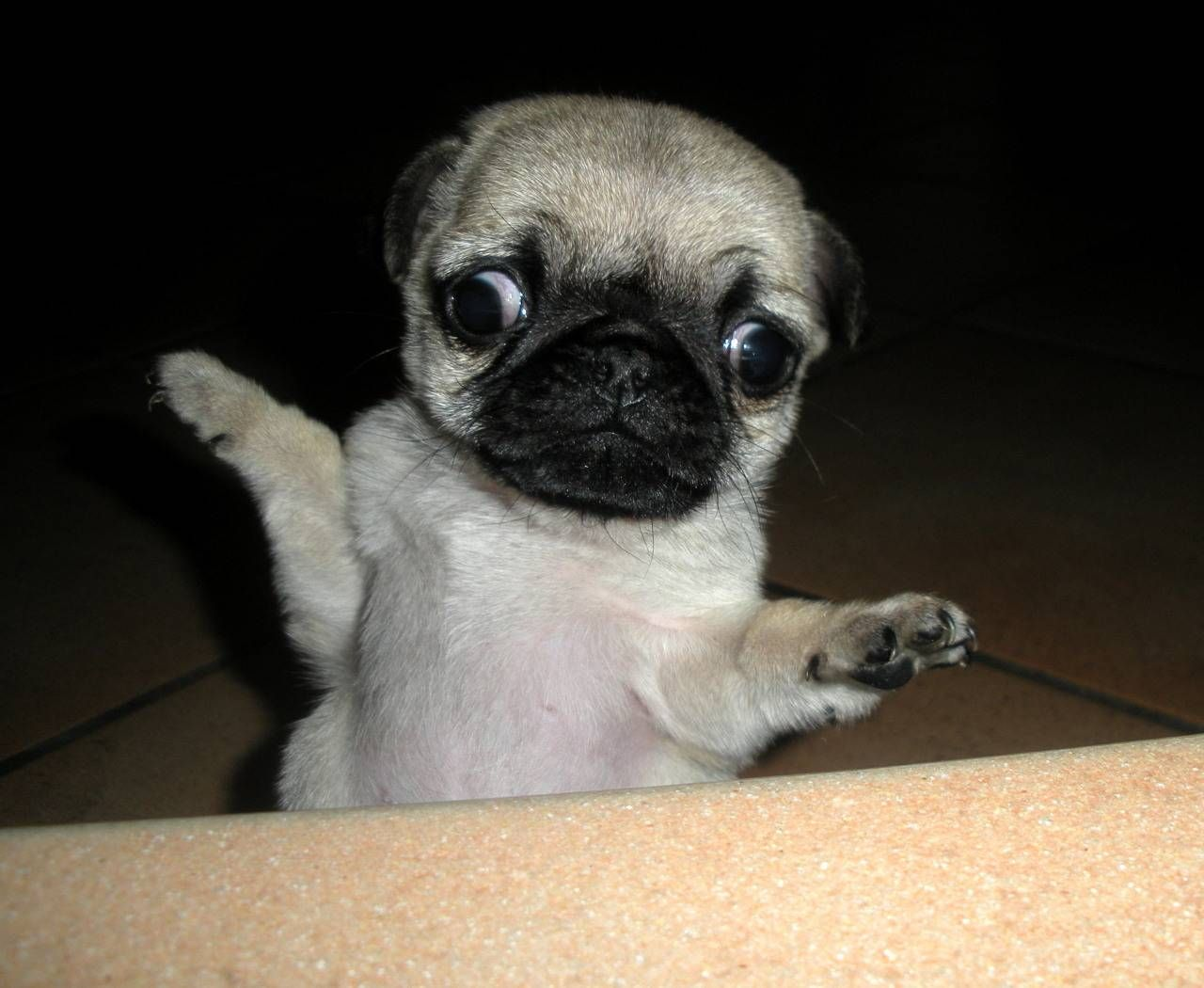 Can Animals Have Down Syndrome? Here This Explanation and