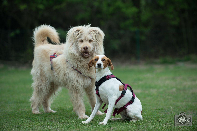 Vermittlung Hunde Tierheim Pfungstadt 2017 Tiervermittlung Hunde
