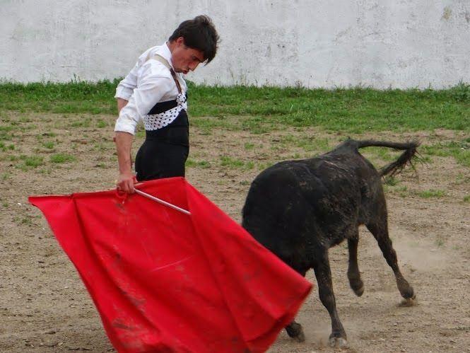 Diário Taurino: Tenta no Alentejo na ganadaria de Dias Coutinho.