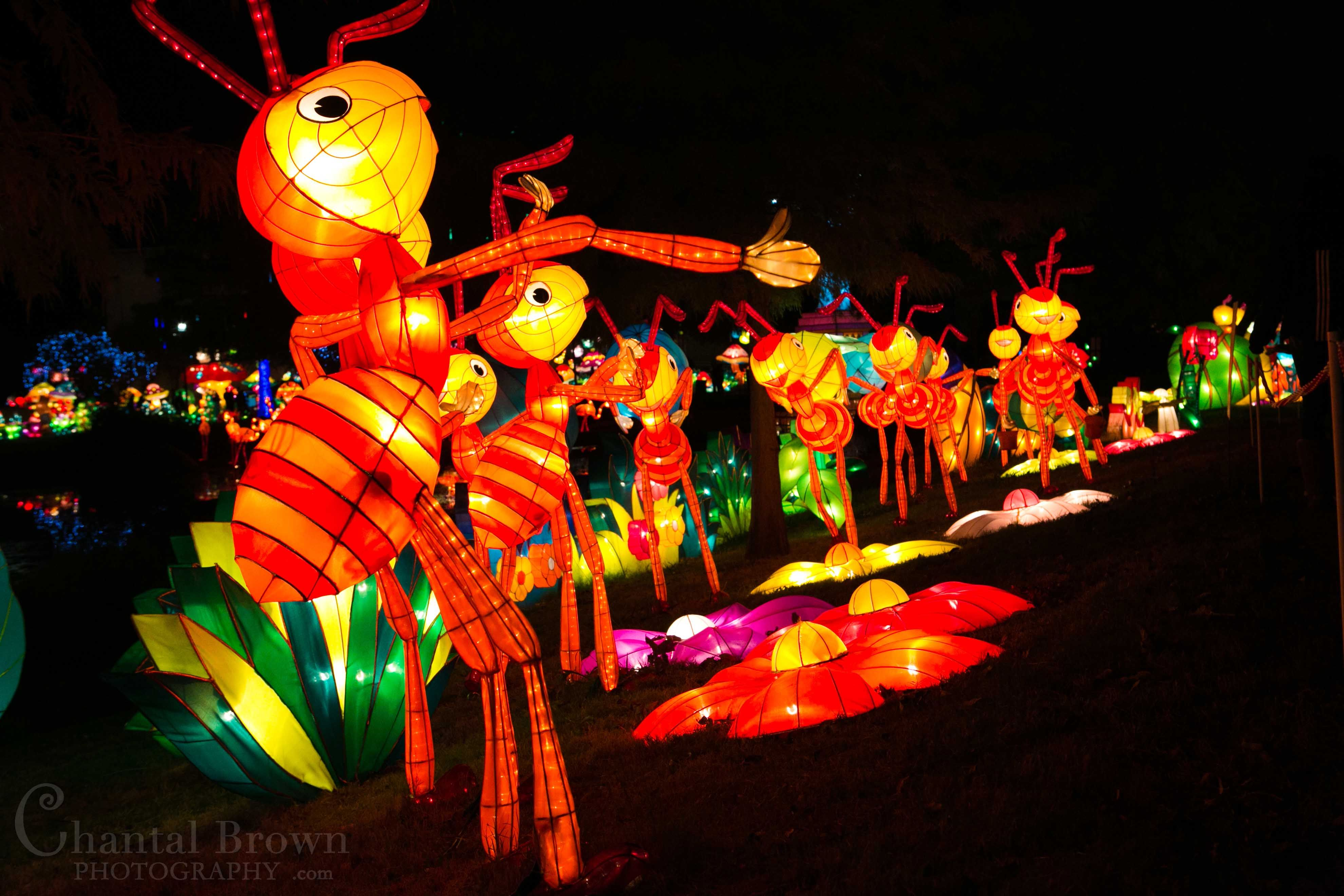 Discover Ideas About Chinese Lantern Festival