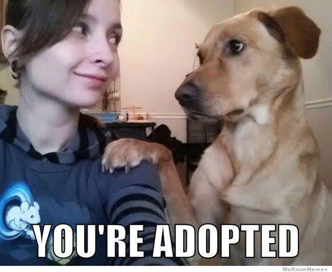 Concerned Dog Youre Adopted Dog Memes Funny Dog Memes Cute Little Animals