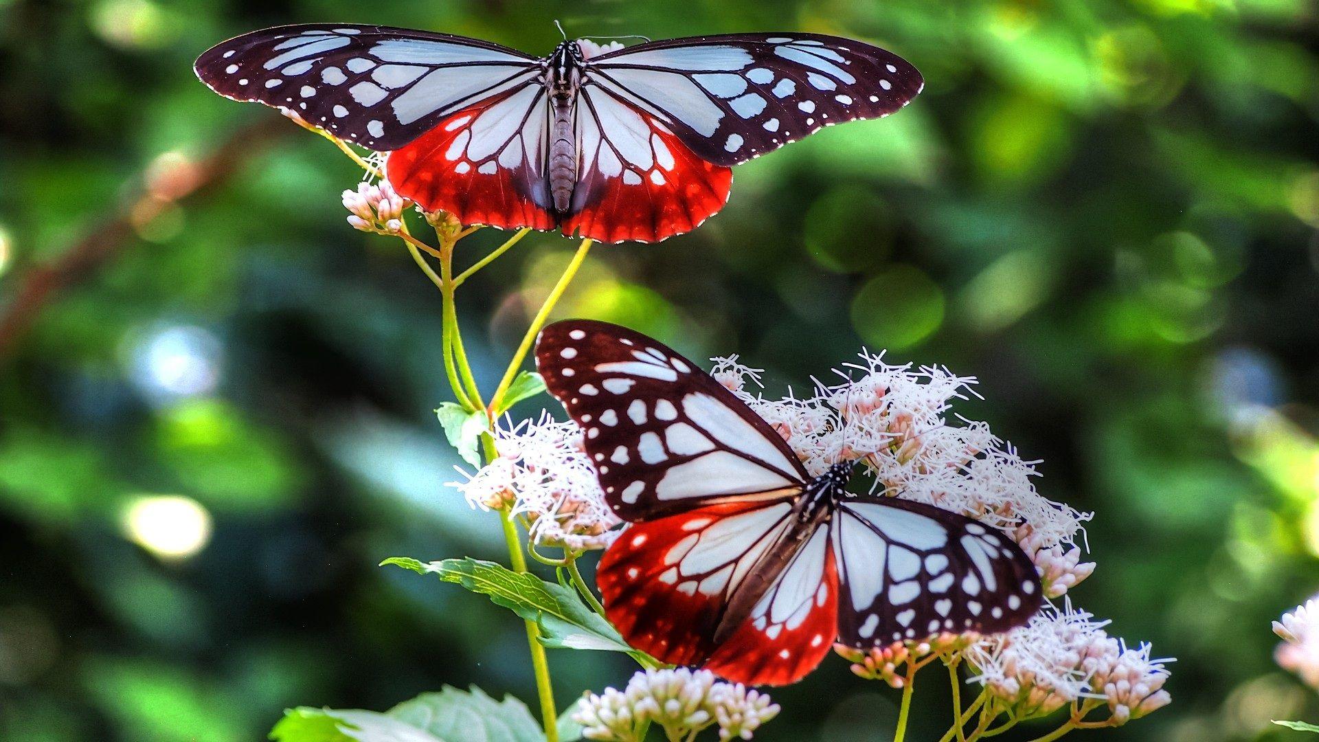 Beautiful Colorful Butterflies