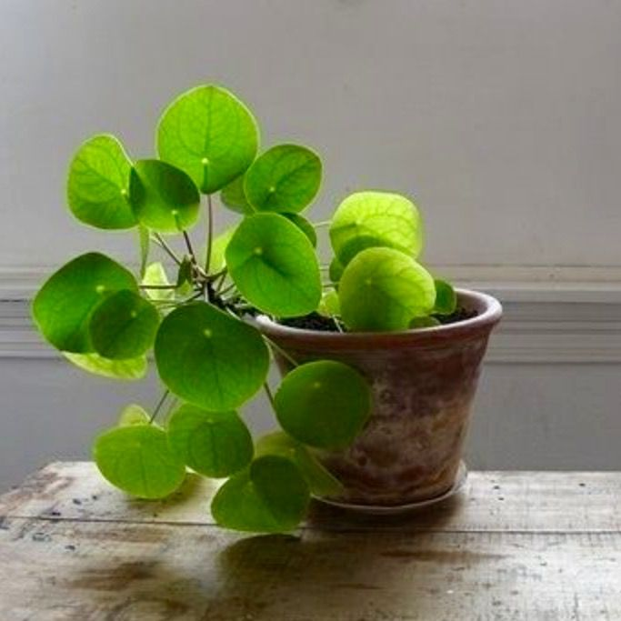 Grünpflanzen Green Plants Zimmerpflanzen: Plants, Plants, Plants!