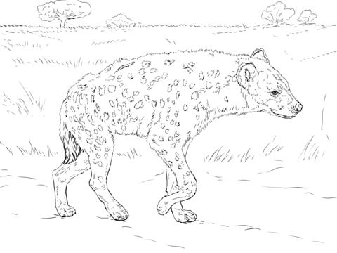 Hiena Moteada Caminando por la Sabana Dibujo para colorear ...