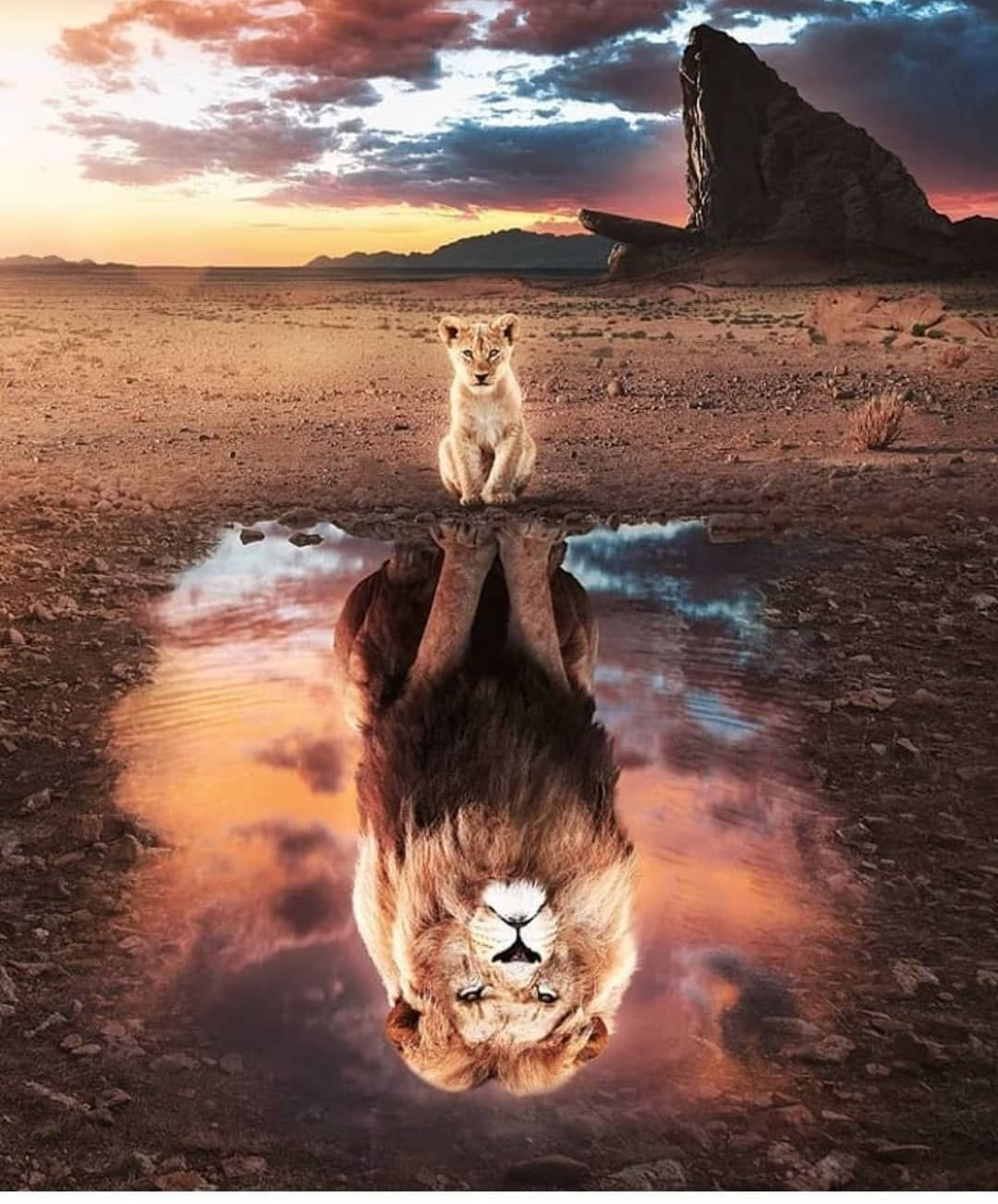 Lion On Instagram If You Love Lions You Must Check The Link In Our Bio Exclusive Lion Related Products O In 2020 Lion King Animals Animal Posters Lion Pictures
