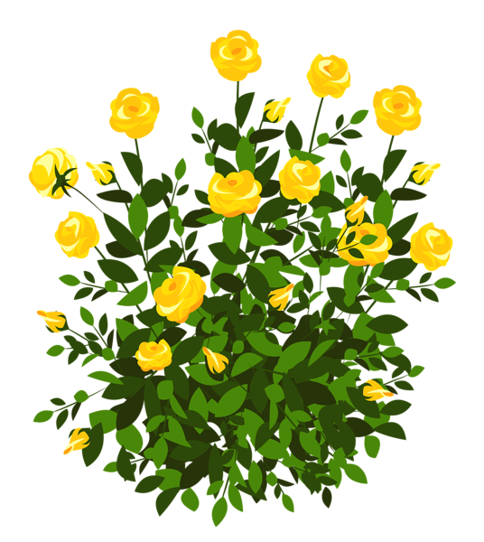 Yellow Rose Bush PNG Clipart Picture Yellow roses, Rose