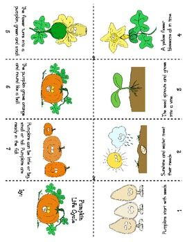 pumpkin life cycle - Cerca con Google
