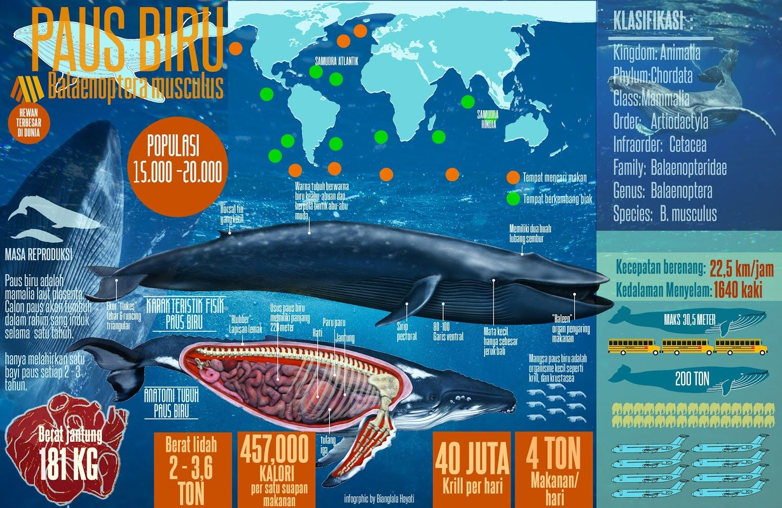 Gambar Infografik Paus Biru Di 2020 Paus Biru Biru Mamalia